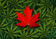 Canada legalisation of marijuana does not extend to the us